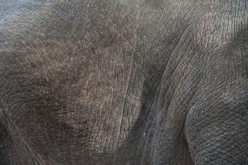 Elephant skin - Free image #275013