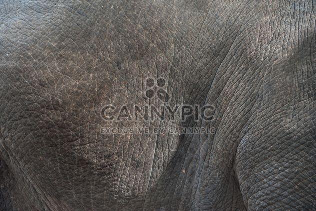 Elefantenhaut - Kostenloses image #275013