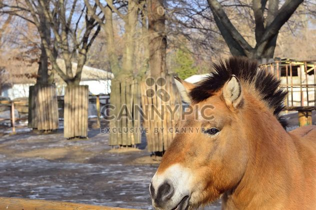 Wild horse in th Zoo - Free image #275033