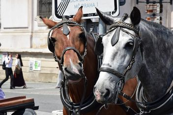 carriage drawn by two horses - бесплатный image #275043
