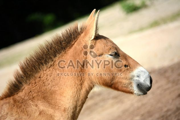 Brown horse - Free image #275053