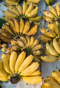 Bananas - image gratuit #275073