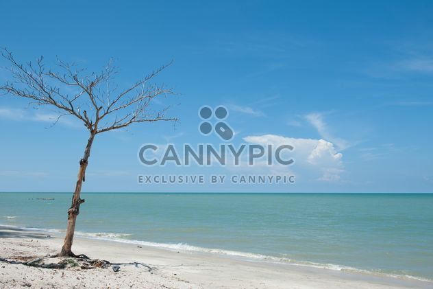 Tree on beach - Free image #275093
