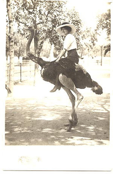 Lady on ostrich (postcard) - Free image #275343
