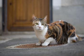 Cat & Manhole - Free image #275593