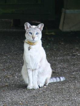 Cat - image #275603 gratis