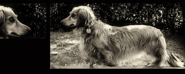 the Lassie in him - Free image #275643
