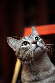 Cat - image #275703 gratis