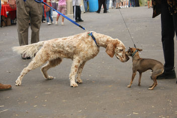 Dog Meets Dog - image #275833 gratis