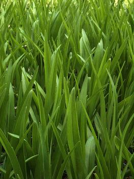 Green Blades - image #275893 gratis