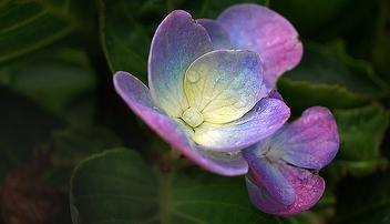 Violet - Free image #276063