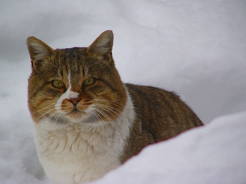 street cat - Free image #276143