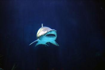 Shark - Free image #276263