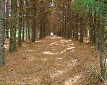 Deer trail - Free image #276493