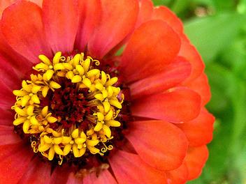 Flower - image gratuit(e) #276693