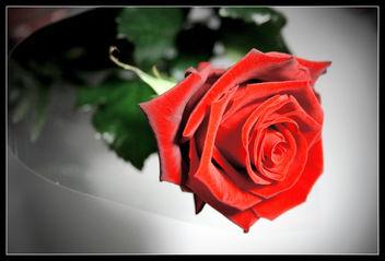 Rose - image gratuit #276753