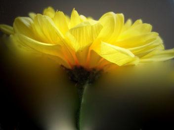 Springtime - Free image #276963