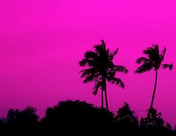 Trees - бесплатный image #277103
