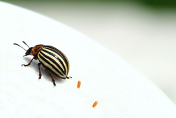 bug and eggs - Free image #277123