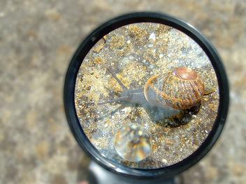 escargot / snail - image gratuit #277173