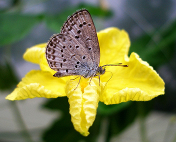 Butterfly on a yellow flower - бесплатный image #277263