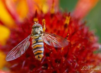Wonderful Wings - Free image #277393