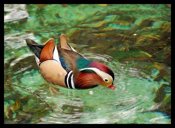 Mandarin Dunk - Kostenloses image #277513