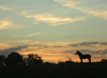 Wild horses - Free image #277553