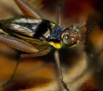 Cricket up close - image gratuit #277583