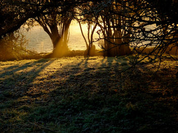 Golden light on a frosty morning - Free image #277673