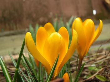 heralding spring - image gratuit #278163