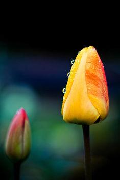 Dites-le avec des fleurs - image #278233 gratis
