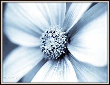 Cosmos - image gratuit #279153