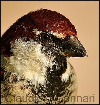 Birds vain ... - Kostenloses image #279503