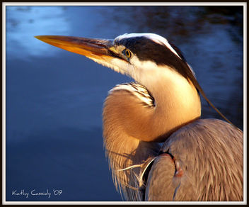 Heron Portrait - image gratuit #279623