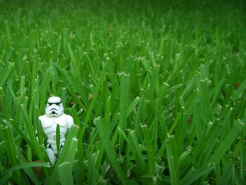 I Fought The Lawn ... And The Lawn Won - image gratuit #279843