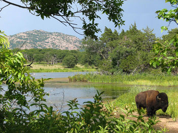 Buffalo and French Lake, Wichita Mountains, Oklahoma - Free image #280213