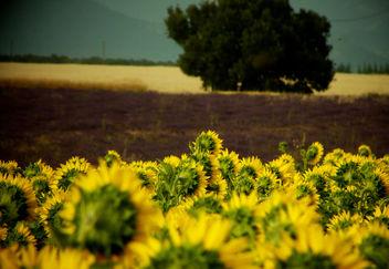 Agriculture en couleur - Free image #280243