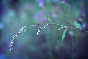 summer haze - Free image #280313
