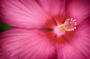 Petite Pink - Free image #280543