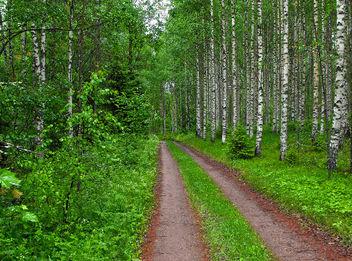 Path - Free image #280923