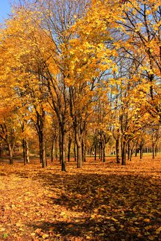 Autumn yellow leaves - image gratuit(e) #280943