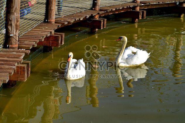 Белый Лебедь - бесплатный image #280983