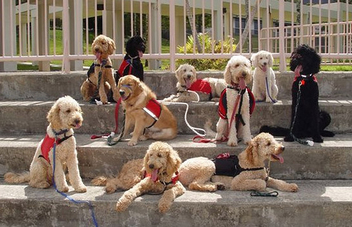 Service Dogs of Hawaii Fi-Do, Training Session, Working Dogs, Job, Group Photo - Free image #281163