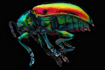 Chrysochus-auratus,-unknown,-side_2012-07-24-14.33.19-ZS-PMax - Free image #281513