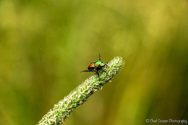 Beetle - Kostenloses image #281873