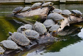 Gala de tortues - бесплатный image #282003