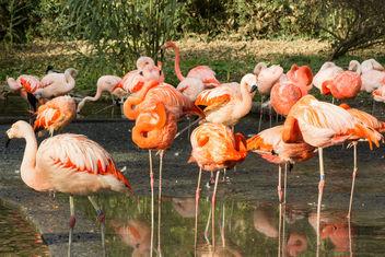 Flamingo - Kostenloses image #282163