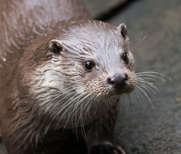 otter1 - Free image #283283