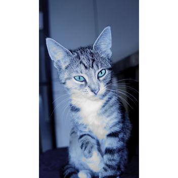 Kitten - Free image #283343